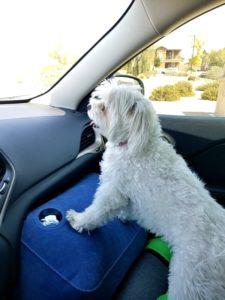 It also acts as a 'crash pad' preventing your dog from crashing onto floor when your car comes to a unexpected stop!