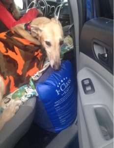 It will provide extra space for your dog, especially if you have passengers in the other seats. Just inflate and cover the pillow with your dog's favourite mat/blanket.